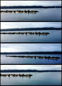 4 pictures of sea lions on a floating dock.